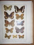 1912 Бабочки Европы с цветными иллюстрациями photo 1