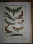 1912 Бабочки Европы с цветными иллюстрациями photo 6