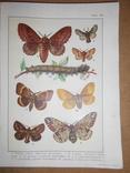 1912 Бабочки Европы с цветными иллюстрациями photo 7