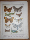 1912 Бабочки Европы с цветными иллюстрациями photo 8
