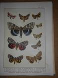 1912 Бабочки Европы с цветными иллюстрациями photo 9