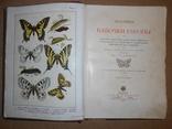 1912 Бабочки Европы с цветными иллюстрациями photo 10