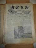 Журнал Нива. Фрагменты, остатки 1913г., фото №5
