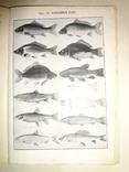 1912 Рыбоводство