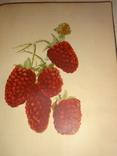 1933 Мичурин Выведение новых растений