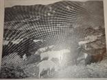 1913 Грузинская природа в фотографиях