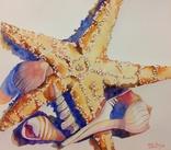 Натюрморт с морской звездой