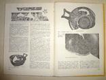 Античные Древности Причерноморья 1900 тираж