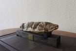 Окаменелая рыба Меловый период (90-110 млн лет)