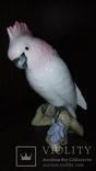 Попугай Royal dux Выс.-20см. photo 1