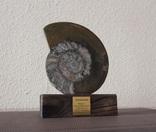 Аммонит Девонский период (360 млн лет) полированный распил на подставке