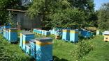 Мед з домашньої пасіки (травневий+акація 2 л.,чиста вага меду 2.8кг.) photo 4