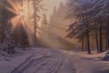 Пейзаж ''Мороз и солнце''. Холст, масло. 60х90 см Карлович Е.В.