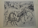 1928 Наши ядовитые растения и животные