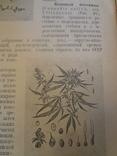 1926 Лекарственные Растения СССР есть канабис