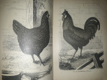 1899 Практическое птицеводство. Содержание и разведение птиц