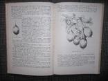 Культура ягодников в приусадебных садах.1966 год., фото №8