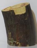 Бивень мамонта ( фрагмент) photo 3