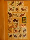 Альбом. животные.флора.фауна. photo 6