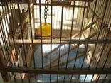 Клетка для птиц. photo 12
