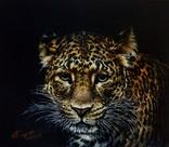 Дикие коты-Леопард.автор Березина К.