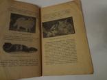 Домашняя Кошка ее породы содержание книга до 1917 года