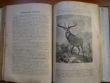 Справочник о животных, фото №6