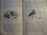 Справочник о животных, фото №7