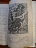Справочник о животных, фото №11
