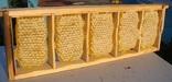 Сотовий мед (лот складає 1-ну  міні рамку вага 300г.).