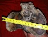 Большая кость шерстистого носорога