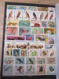 Альбом з марками.Марок 850 шт. photo 6
