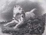 1847г. Гравюра Охотник на кроликов с трофеем 19 век