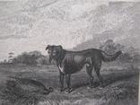 1832г. Гравюра на стали в паспарту охотничья сцена с фазаном 19 век