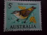 Фауна. Птицы. Австралия. гаш, фото №2