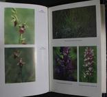Орхидеи 1991р., фото №6