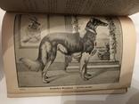 1898 Расы Собак Эффектные Иллюстрации
