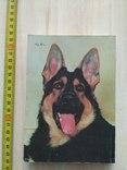 """Баранов """"Здоровье вашей собаки"""" 1989р., фото №3"""