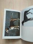 Справочник собаковода любителя, фото №13