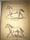 1939 Лошадь в Красной Армии