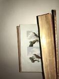 Птицы Легендарное Изд. Бюффона золото и ручная роспись до 1820 года