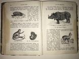 1883 Зоология под редакцией Мечникова с множеством рисунокв