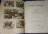 1880 Европейские животные 29х22 см.