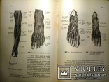 1900 Описательная и топографическая анатомия человека. Атлас д-ра Гейцмана. 2 тома.