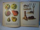 Атлас вредителей плодовых и ягодных культур, 1976 г, фото №9