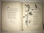 1903 Прижизненное И.Франко Сборник Аккорды с Эффектными иллюстрациями
