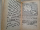 На Баунти в южные моря. Бенг Даниельссон.  1966. 254 с.ил., фото №9