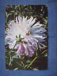 Открытки цветы, фото №2