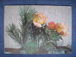 Открытки цветы, фото №4