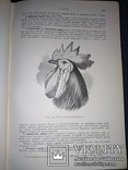 1911 Иллюстрированое сочинение Дарвина photo 5